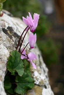 pink-flowers-on-rock.jpg