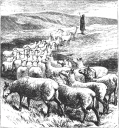 sheep_following.png